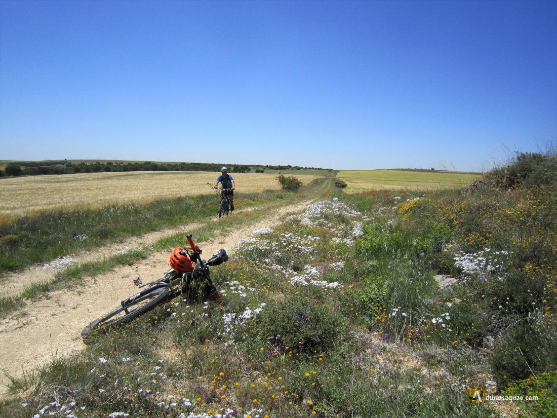 Camino de Santa María, hacia Villajimena