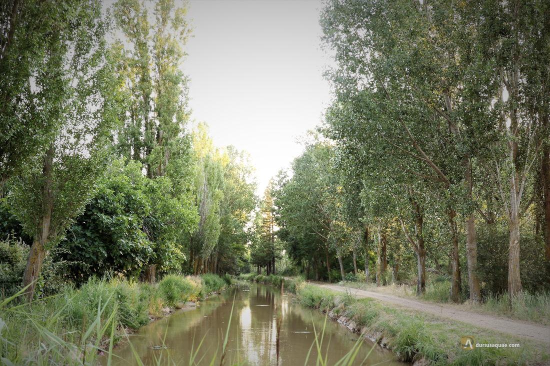 Canal del Duero junto a la acequia de Valdelga