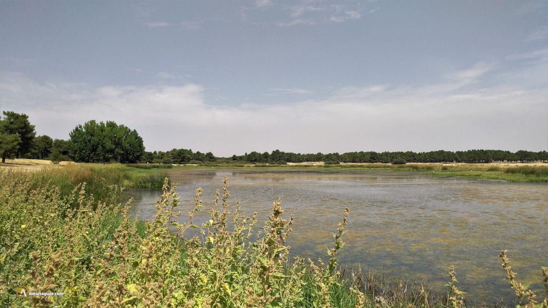 Laguna recuperada de Navalayegua, Cantalejo en la ruta de fuentes salvadoras