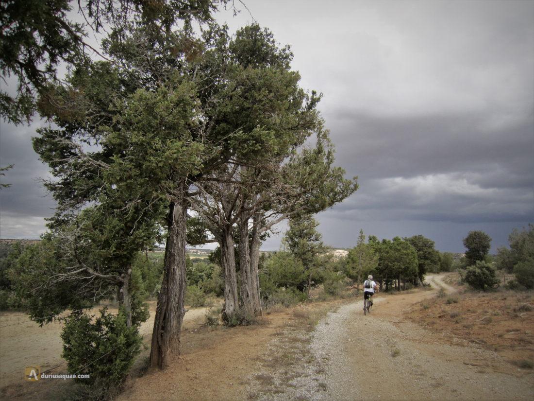 Montes de Castillejo de Robledo junto al arroyo de la Nava