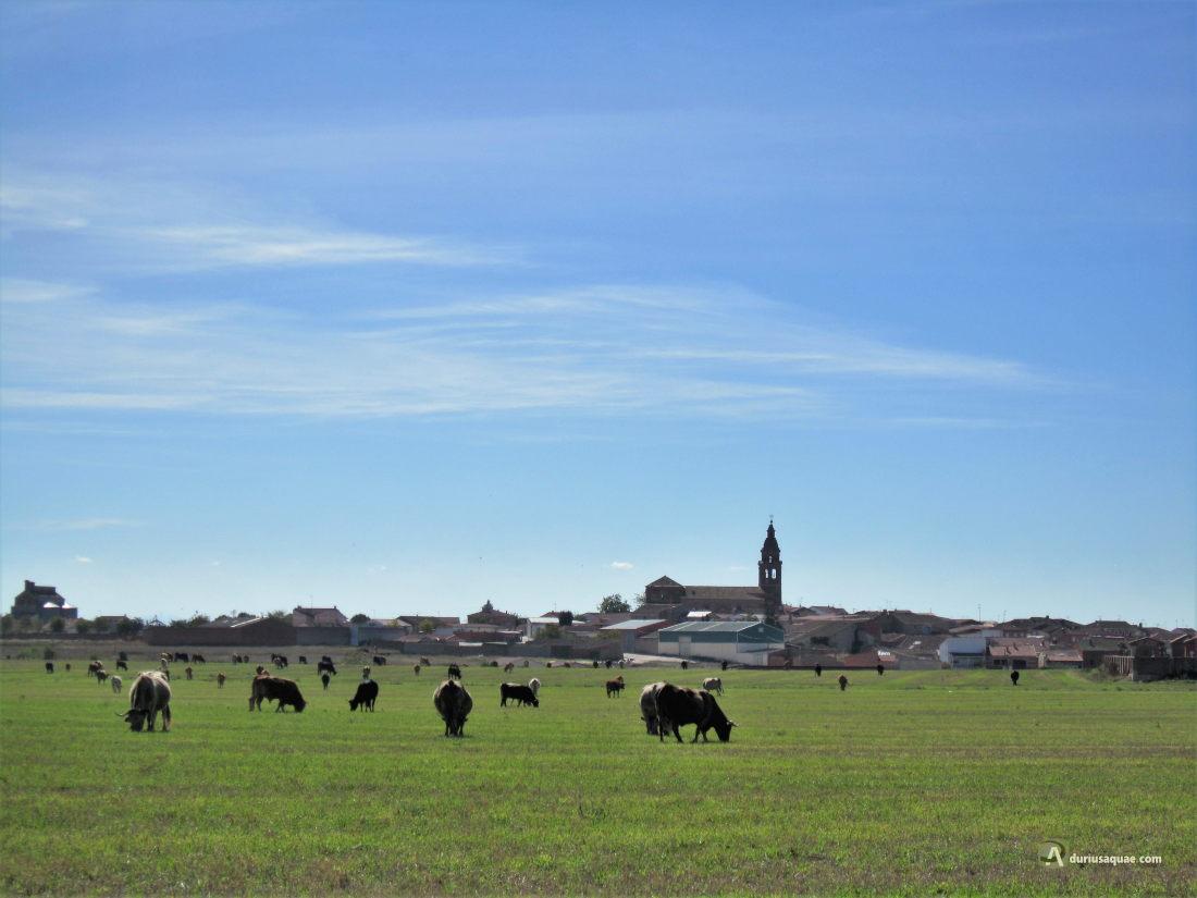 Torrecilla de la Orden, un pueblo también de La Guareña